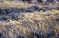 Nationaal Park Zuid-Kennemerland grass.jpg