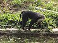National Zoological Park Delhi 043.jpg