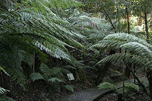 Australian National Botanic Gardens - National Botanic Gardens Rainforest Tour