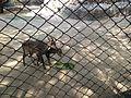 National zoological park delhi.jpg