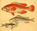 Naturgeschichte in Bildern mit erläuterndem Text (Taf. CVII) (6059224224).jpg