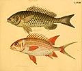 Naturgeschichte in Bildern mit erläuterndem Text (Taf. LXXVII) (6058670209).jpg