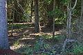 Naturschutzgebiet Trunnenmoor IMG 2654.jpg