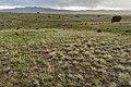 Near Alamosa Creek - Flickr - aspidoscelis.jpg