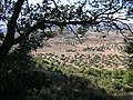 Near Calaceite 13-12-2007 - panoramio.jpg
