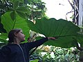 New umbrella.jpg