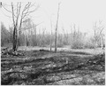Newberry County, South Carolina. Pasture development on bottom lands by CCC Camp F-6 on National Fo . . . - NARA - 522815.tif