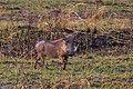 Nkomazi Game Reserve, South Africa (22464801420).jpg