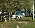 Noosa rugby cars.jpg