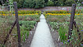 Northern Gardens - The Lost Gardens of Heligan (9757672355).jpg