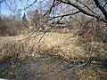 Oak Hollow Conservation area of Schaumburg, Illinois.JPG