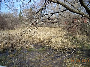 Schaumburg, Illinois - Oak Hollow Conservation area of Schaumburg, Illinois