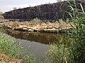 Oasis - panoramio (8).jpg