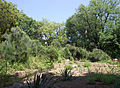 Odessa Main Botanical garden 037.jpg