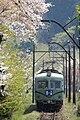 Oigawa Railway cherry blossoms.jpg