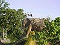 Olifantengroep (kunstwerk Andries Botha) ingang zoo Planckendael - panoramio.jpg