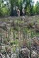 Onbekend 21-04-2009 12-03-03.JPG