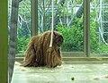 Orangutan 1.jpg