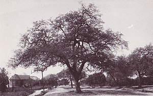 Sierra Madre Memorial Park - Image: Original Sierra Madre City Library