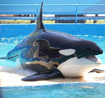 Orque Marineland.jpg
