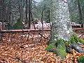 Pădurea toamna - panoramio.jpg