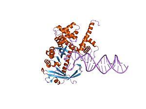 Transposase - tn5 transposase: 20mer outside end 2 mn complex