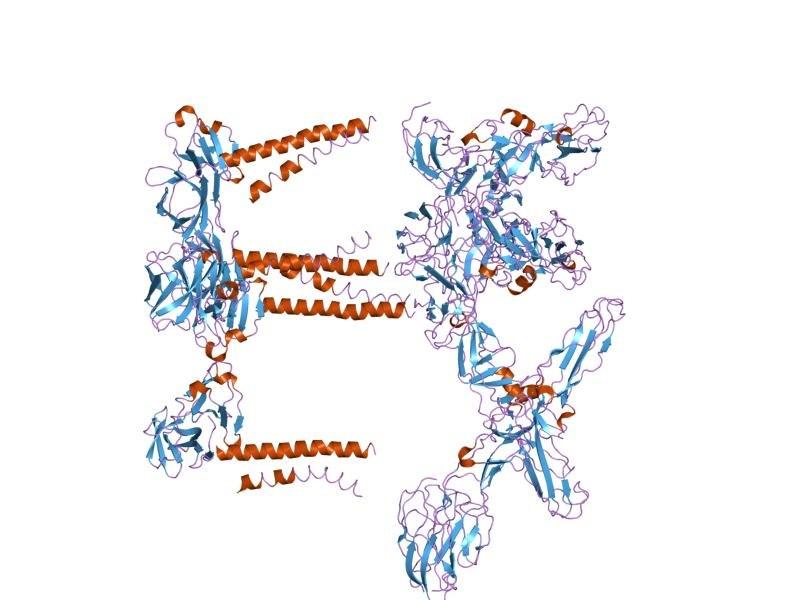 PDB 1z8y EBI