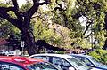 PHOakTrees (4415559170).jpg
