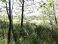 POL Chybie Rezerwat przyrody Rotuz 2.JPG