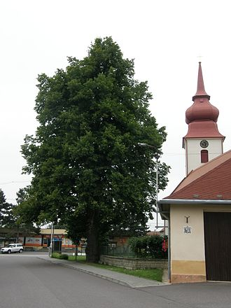 Domamil - Image: PS Lípy u kostela (7)