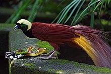 Bali Bird Park Wikipedia