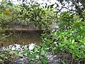 Paranaguá - State of Paraná, Brazil - panoramio - florent1024 (2).jpg