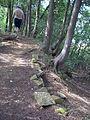 Parc-nature du Bois-de-l-ile-Bizard 75.jpg
