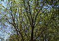 Parc de la Rambleta de València, om.JPG