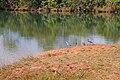Parque Nacional de Brasília (14565711993).jpg