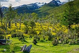 270px Paso de la Oveja%2C Tierra del Fuego National Park