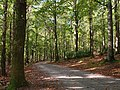 Path, Tollymore forest park (2) - geograph.org.uk - 1540053.jpg