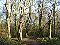 Path on the West Heath - geograph.org.uk - 1114464.jpg
