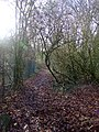 Pathway to Hockley Woods - geograph.org.uk - 301369.jpg