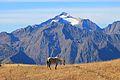 Peak Chugush & horse.JPG
