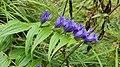 Pflanze Alpen 2.jpg
