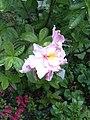 PflanzenMai06-002.JPG