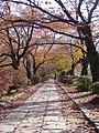 Philosopher's Walk Sakyo, Kyoto - panoramio.jpg