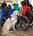 Pies asystujący golden retriever 2009 pl.jpg