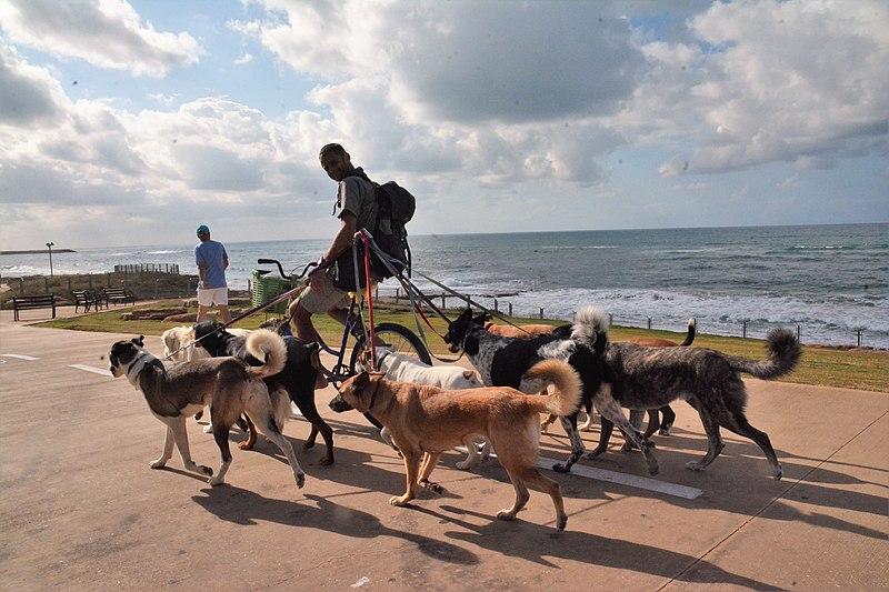 כלבים מטיילים