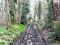 Pinfold Lane - geograph.org.uk - 746177.jpg