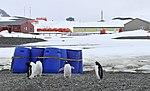 Pingüinos Base Frei.jpg