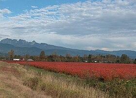 بيت ميدوز (كولومبيا البريطانية) - ويكيبيديا، الموسوعة الحرة