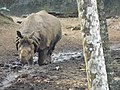 Pity to see all these animals in a sanctuary.india.save them.jpg