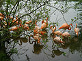 Planète sauvage - Flamants roses.jpg